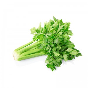 大东北的优质芹菜