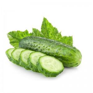 无公害 新鲜蔬菜刺青瓜 黄瓜